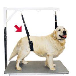 Show Tech – רצועת ריסון לבטן הכלב עם נוחות – כלבים גדולים / קטנים